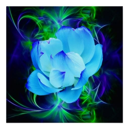 Blue Lotus Flower And Its Meaning Poster Tattoos Pinterest