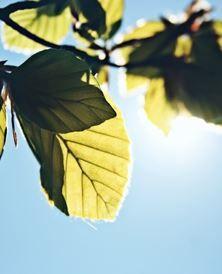 sunshine<3