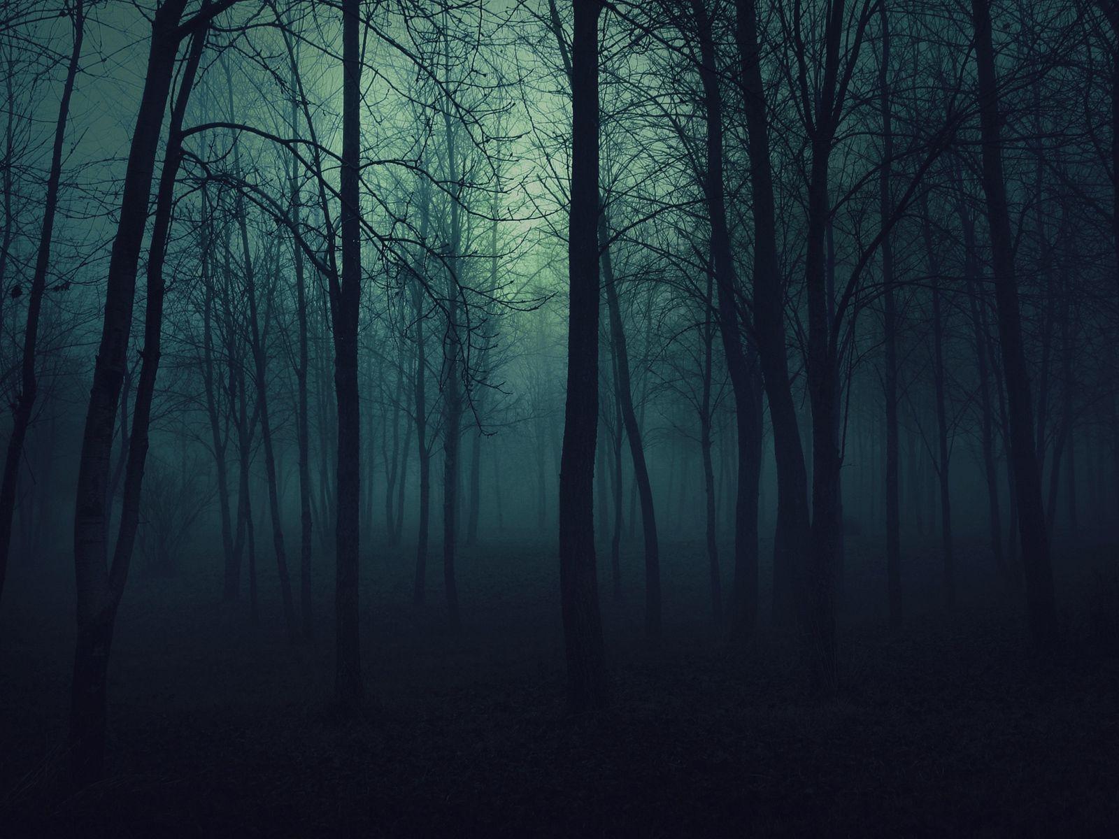 Download Wallpaper 1600x1200 Wood Trees Gloomy Fog Haze Darkness Standard 4 3 Hd Background Dark Wood Background Forest Wallpaper Scary Backgrounds