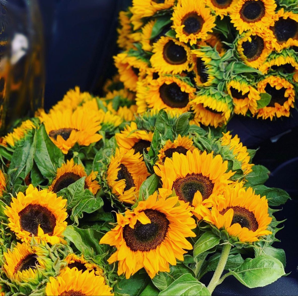 Sunflowers In 2020 Sunflower Delivery Types Of Flowers Red Sunflowers