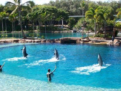 The 7 Most Incredible Dolphin Adventures Sea World Australia Travel Gold Coast