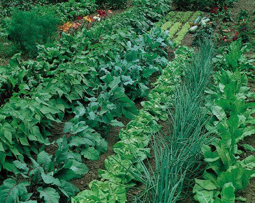 Large vegetable garden layout plans cher shots for Large vegetable garden plans