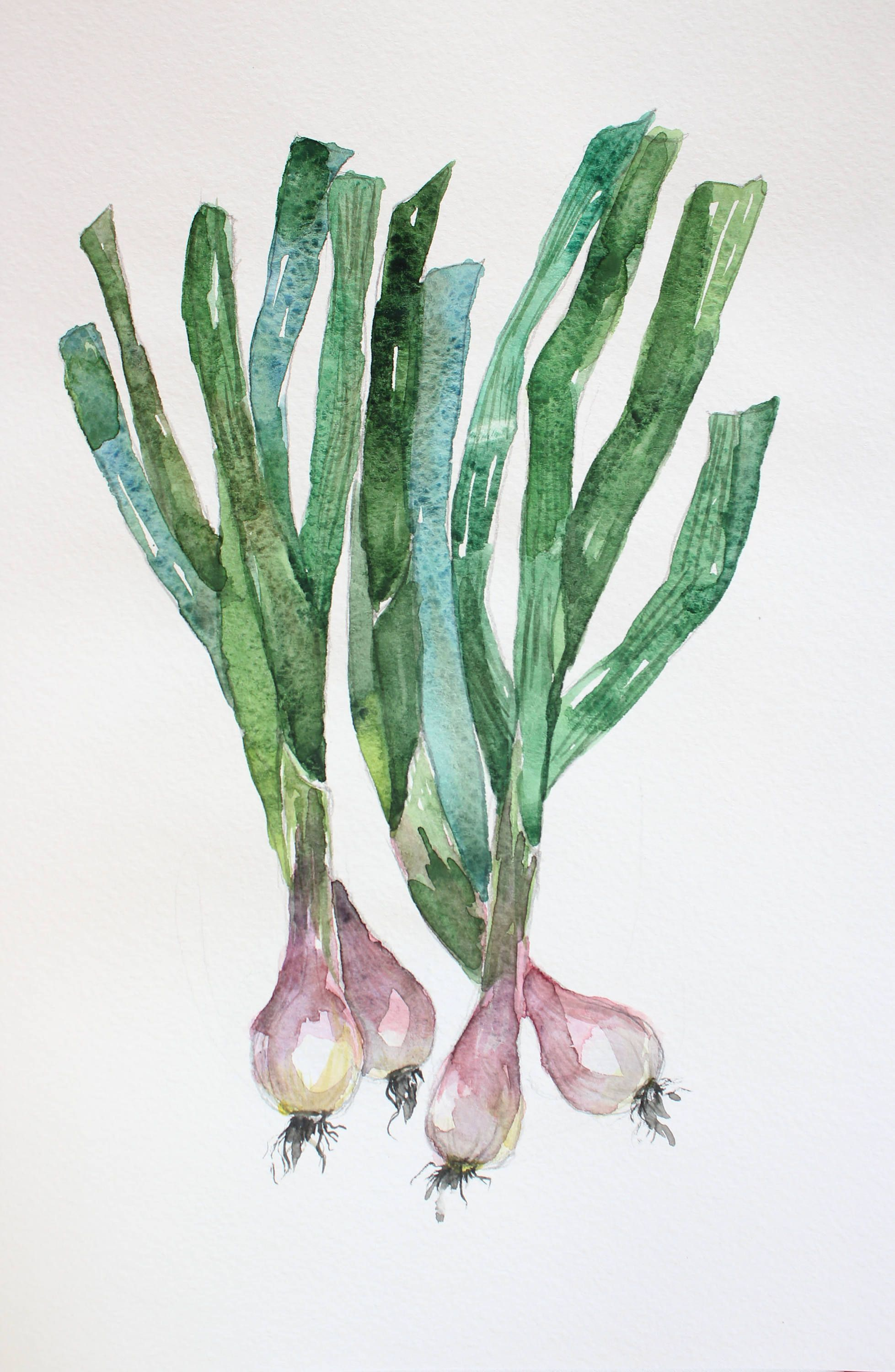 Original Watercolor Green Onions Organic Vegetables Kitchen