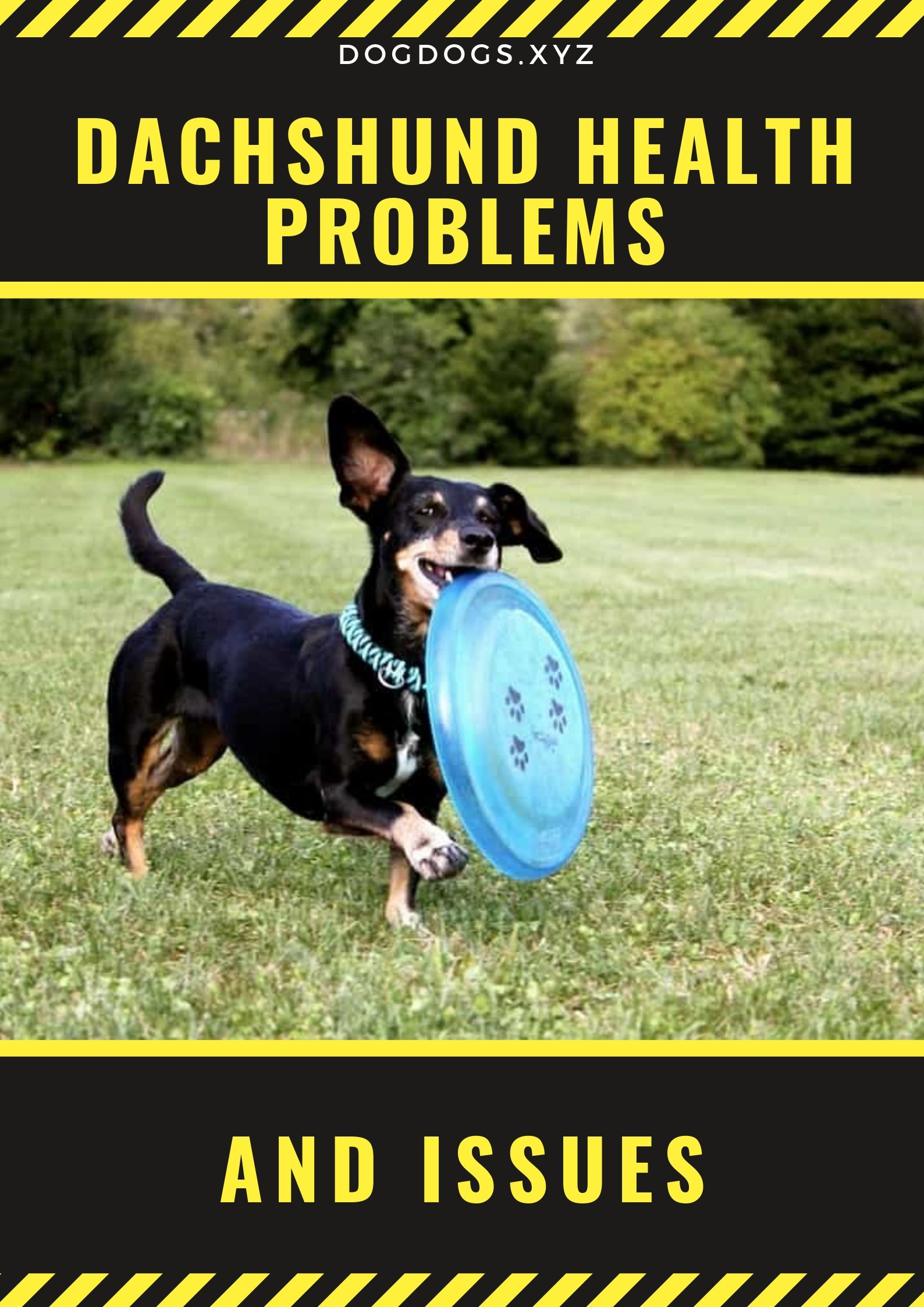 Dachshund Health Problems Issues Dog Health Dachshund