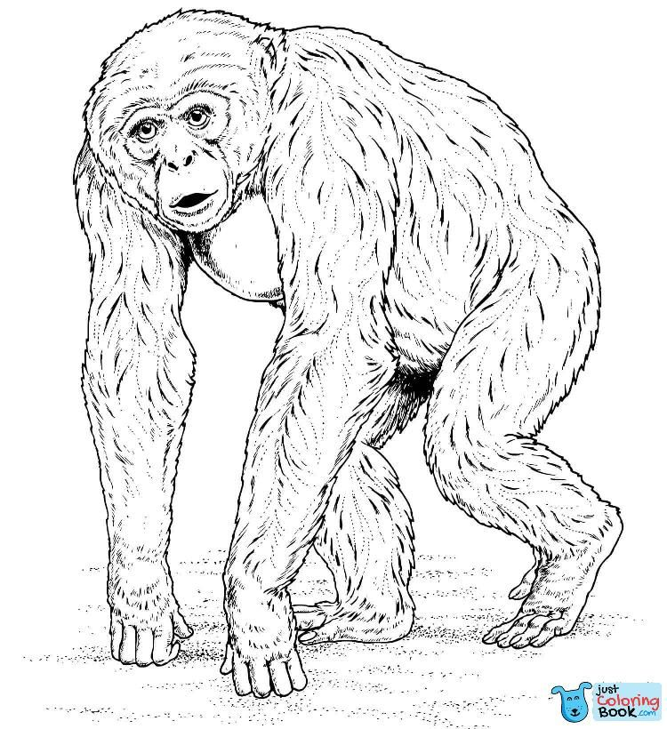 Chimpanzee Coloring Pages Free Coloring Pages Within Pygmy