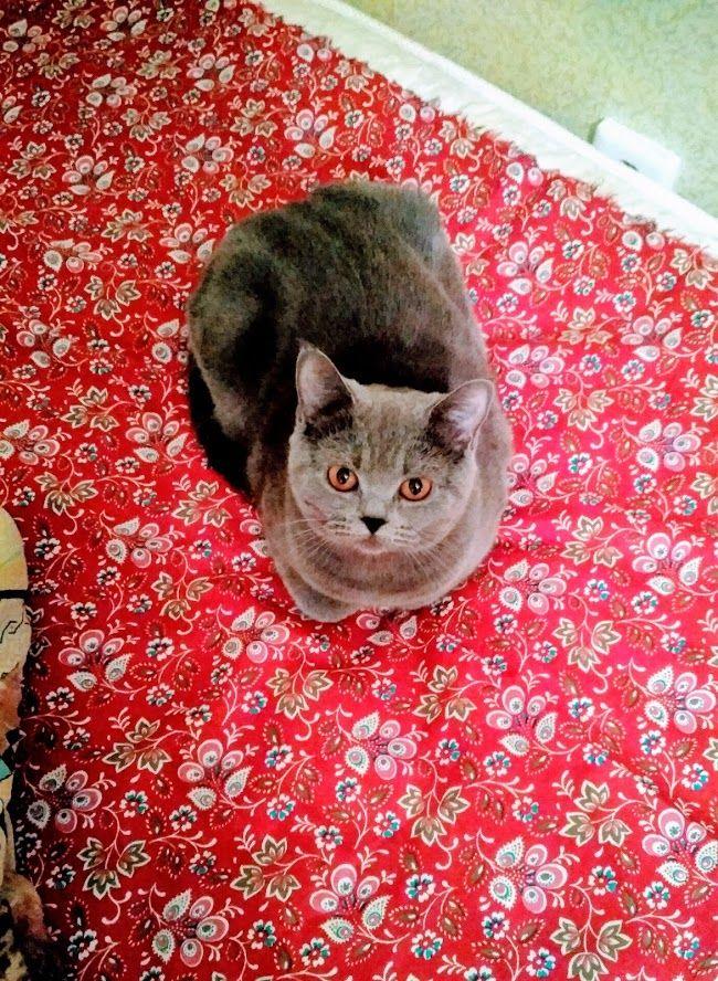 Фотография Google Фото Cat facts, Cat care, Cute cats