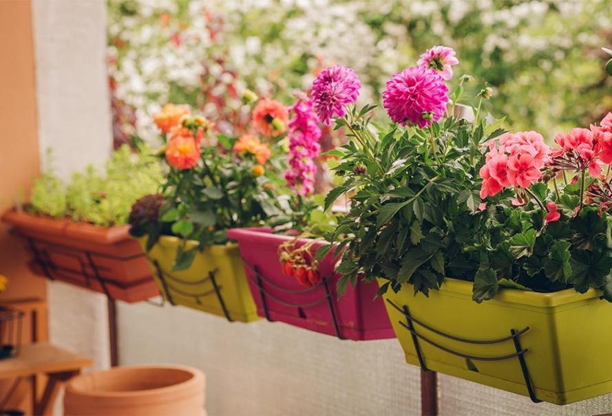 Planter le dahlia en pot en 2020   Beau jardin de fleurs ...