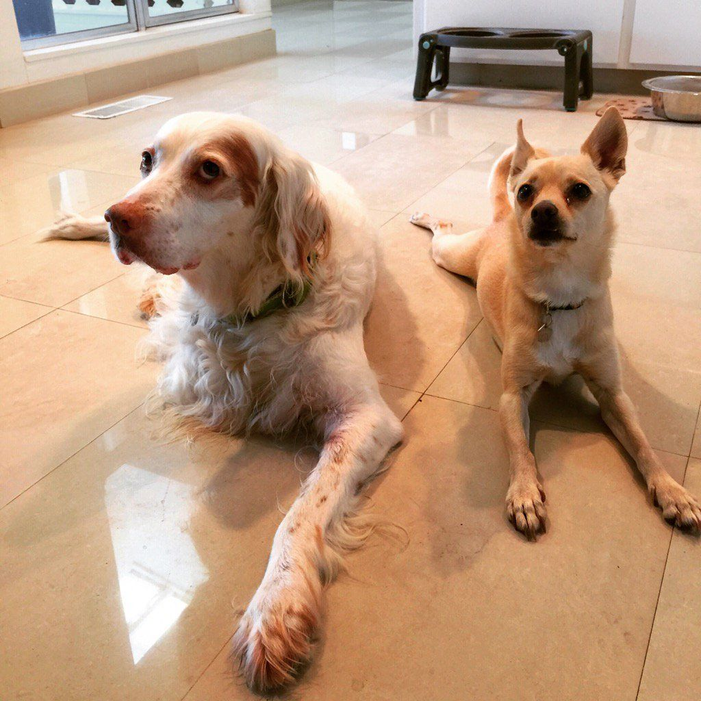Daddy's boy's. Mac & Toto... the meaning of unconditional love