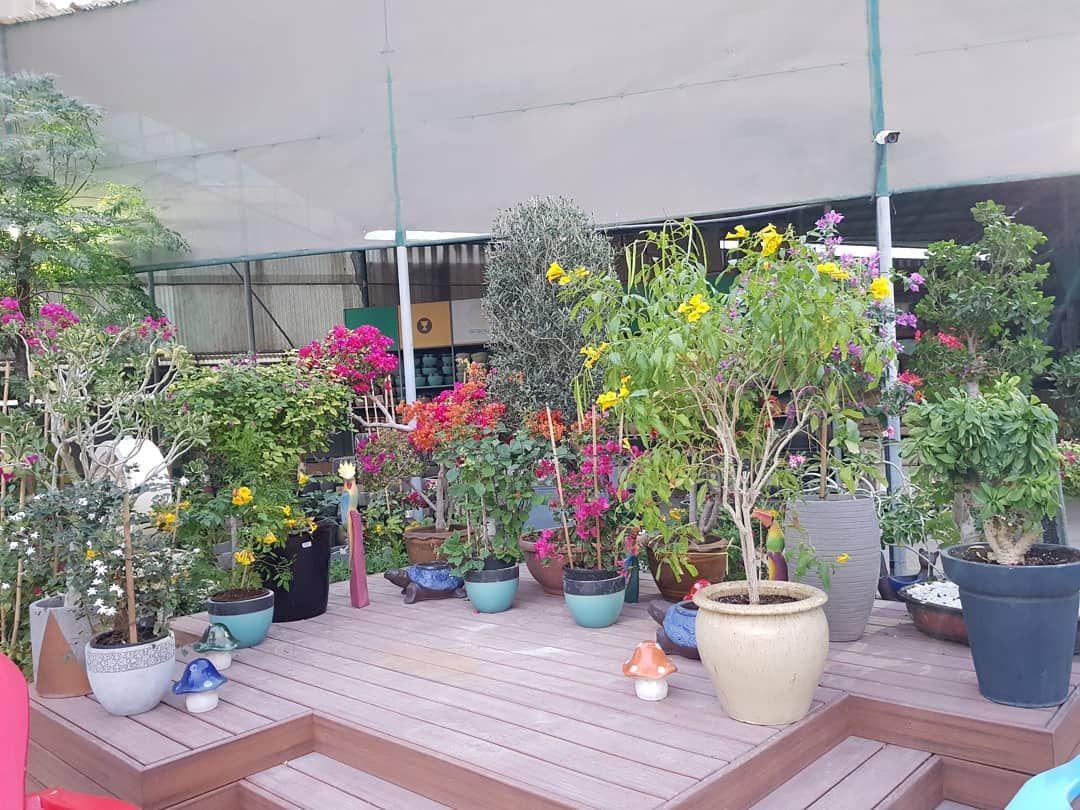 Celebrate your #weekendvibes in Acacia Garden Centre, Dubai