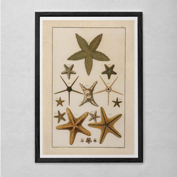 Vintage Starfish Sea Shells Matching Print Set Bathroom Nautical Wall Art Prints