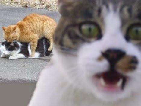 Unduh 99+ Gambar Kucing Marah Terbaik Gratis