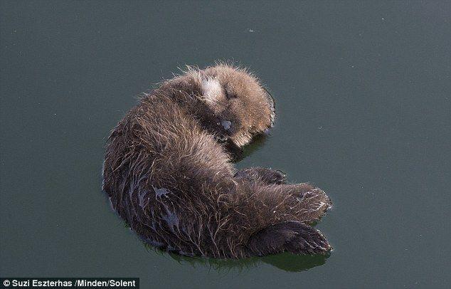 Ze keek toe hoe de moeder haar kind om alleen te drijven in het water gelaten...