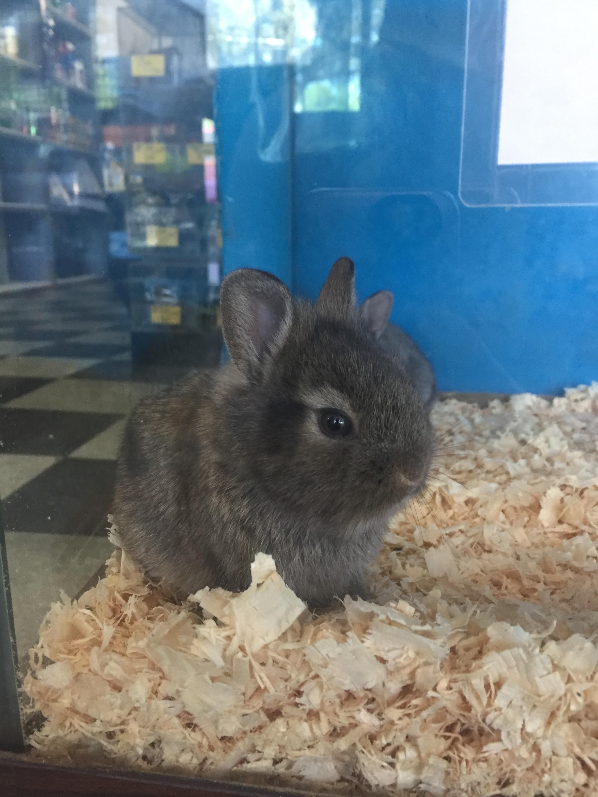 This Is The Smol Est Bunny Ive Ever Seen Https Ift Tt 2pkoinb Pet Bunny Cute Animal Pictures Cute Animals