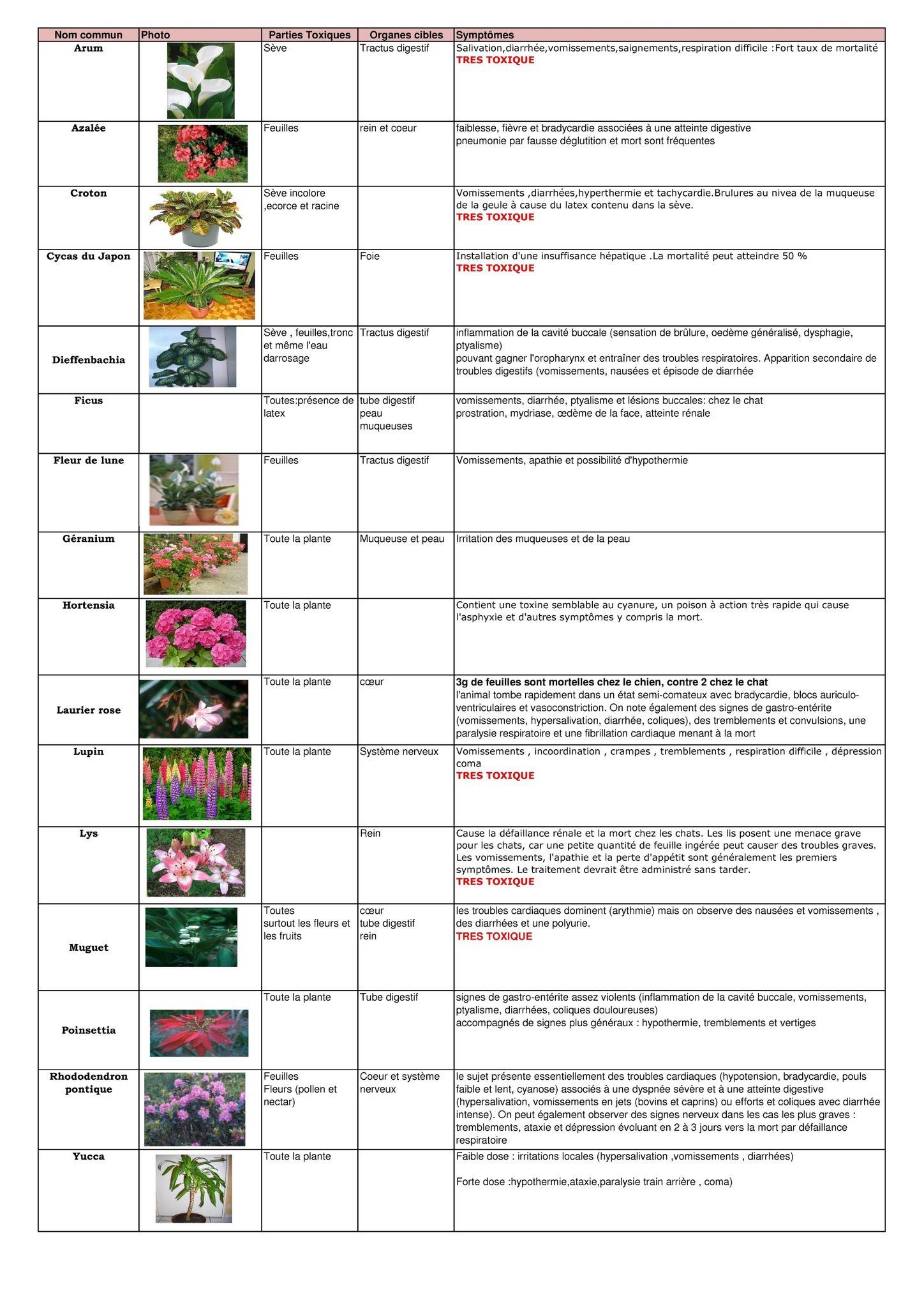 Les Plantes Toxiques Pour Les Chats Abyssins D Abystyle Avec