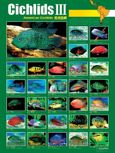Freshwater & Brackish Fish Compatibility Chart | Visual.ly |African Cichlid Chart