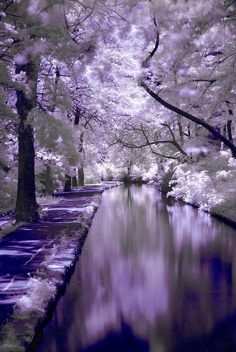 Beautiful Purple Scenery Nature Scenery Landscape