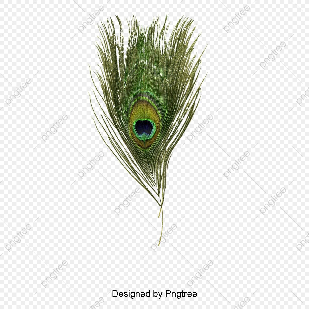 Peacock Feather Peacock Clipart Peacock Feather Png Transparent Clipart Image And Psd File For Free Download Peacock Feather Clipart Images Clip Art