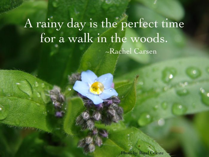 Superb A Rainy Day Is The Perfect Time For A Walk In The Woods. Description From