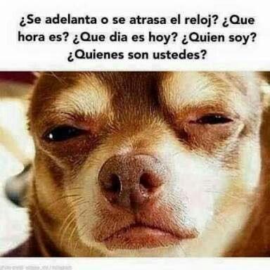 El Reloj Super Funny Memes Funny Animal Memes Mexican Humor
