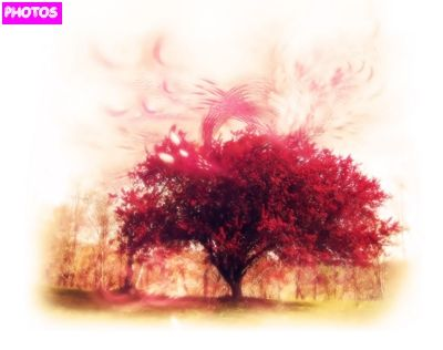 drawing cherry blossom tree google search