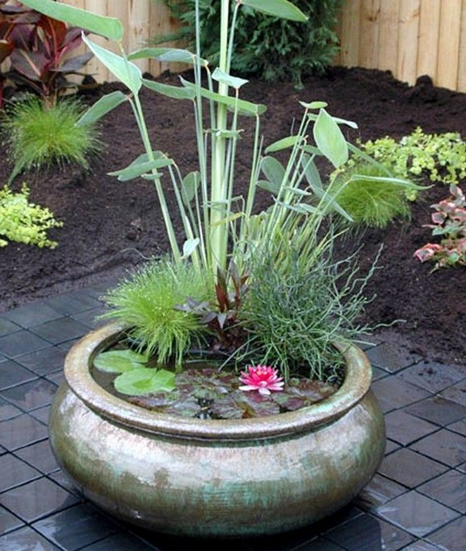 Water Garden Container Plants Ideas Container Water Gardens Indoor Water Garden Miniature Garden