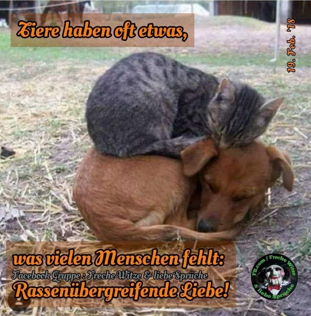 Facebook : Freche Witze & liebe Sprüche #spruch #sprüche #