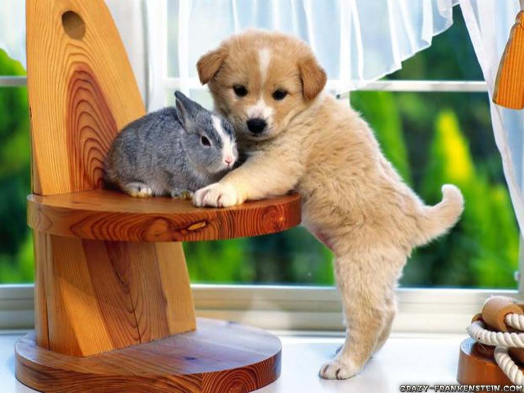 your huging my bunny | animales | pinterest | animal wallpaper