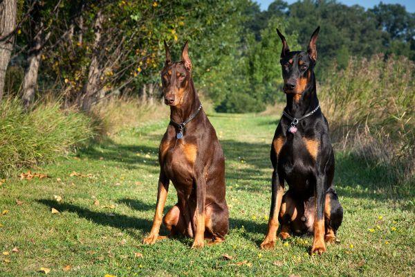 Rescuesdog Beagledog Bulldog Boxerdog Shihtzudog