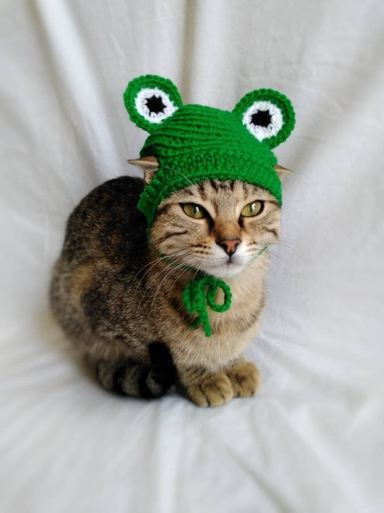 Frog Hat For Cat Frog Pet Costume Kitten Outfit Cat Etsy In 2020 Pet Costumes Crochet Cat Hat Cat Accessories