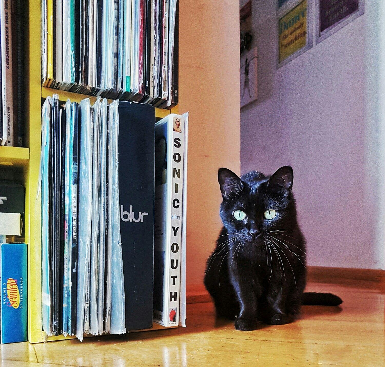 Cat. Black cat. Pet. Gata.