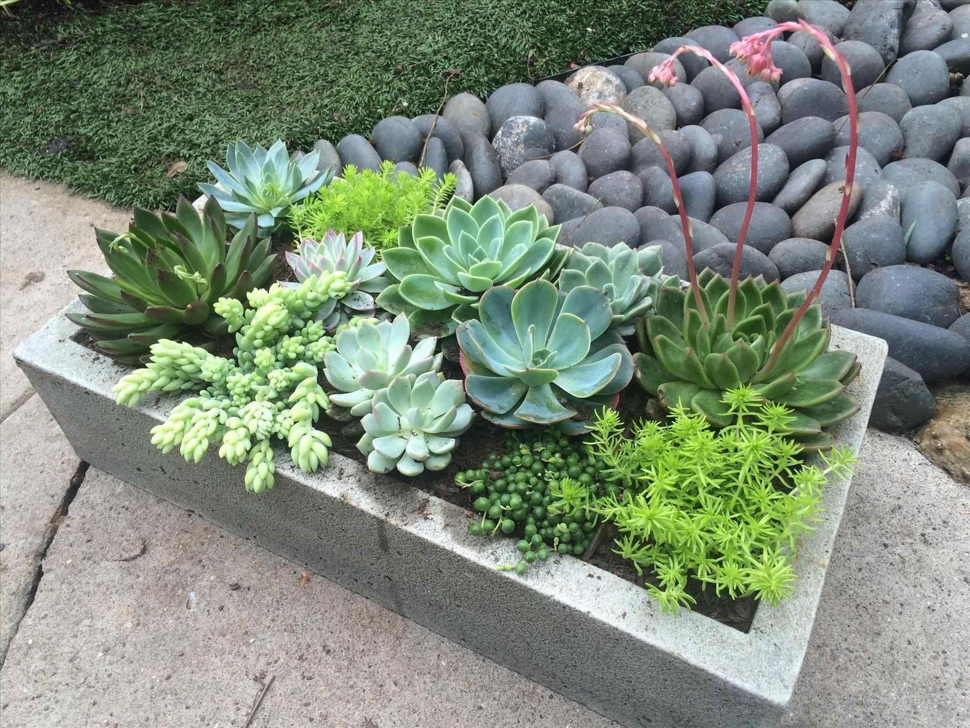 Astounding Top 9 Beautiful Succulent Plants Houston For Indoor Home