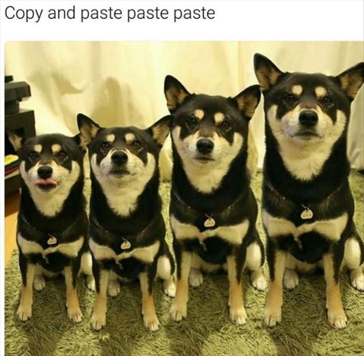 Afternoon Funny Animal Picture Dump 24 Pics Animal Memes Funny Animal Pictures Animals