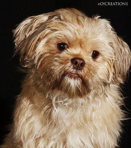 Pin By Vicki Woodman Seichter On Doggie Stuff Safe Dog Toys Morkie Rescue Dogs