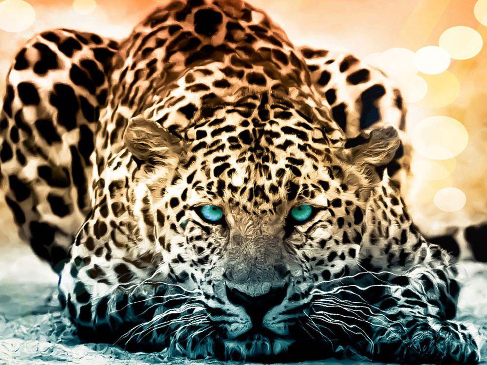 40+ Amazing Wildlife & Animal Wallpapers Animal
