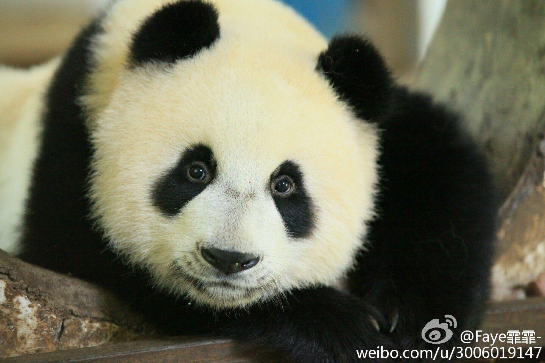 Faye霏霏-的照片 - 微相册 - Xin Bao