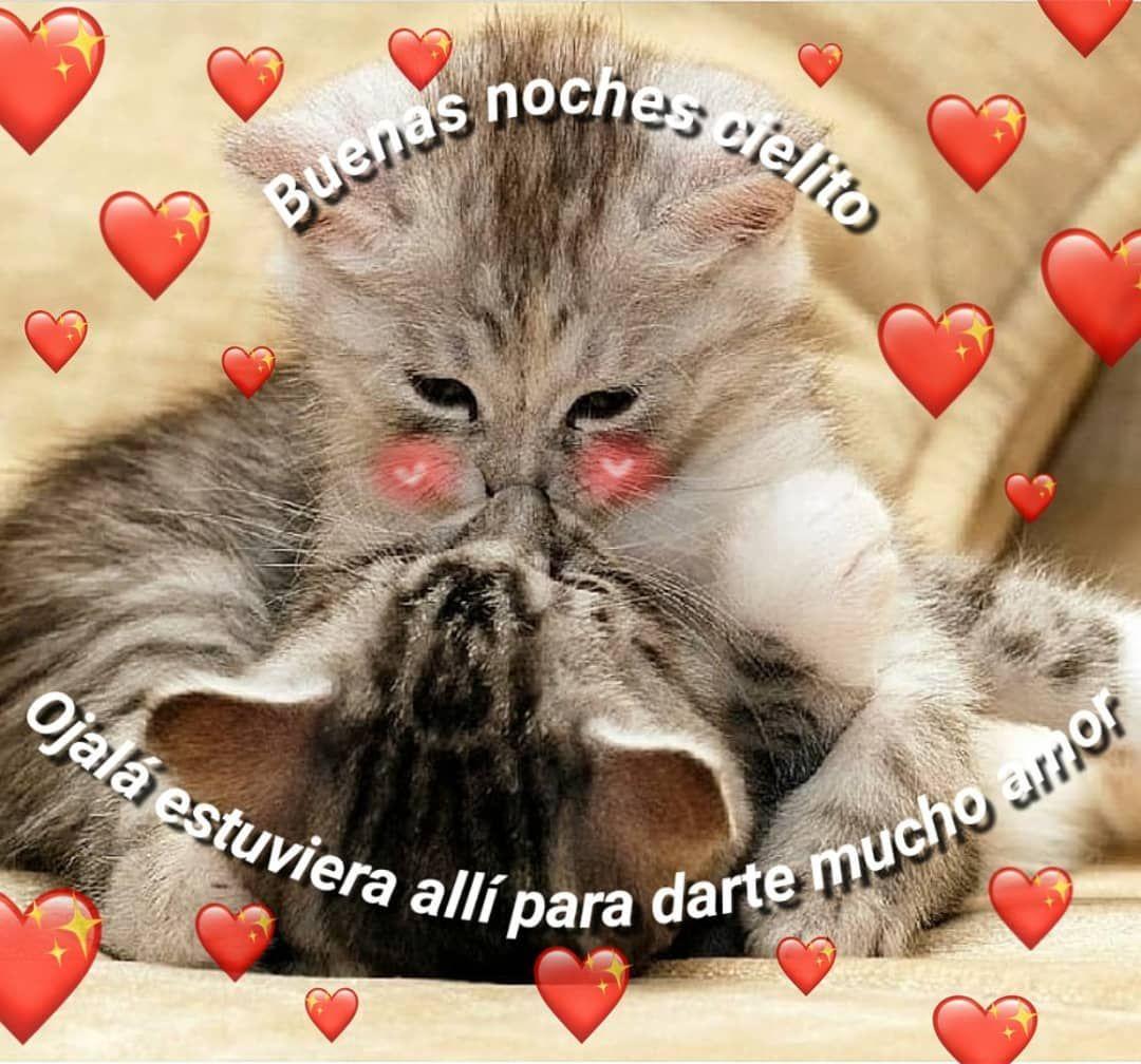 Imagenes De Buenas Noches Con Gatitos Tiernos Imagenes De Buenas Noches Memes Amor Frases De Ternura