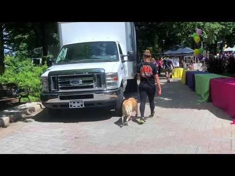 Labrador Retriever Puppies Erie Pa Quakertown Dog Trainers