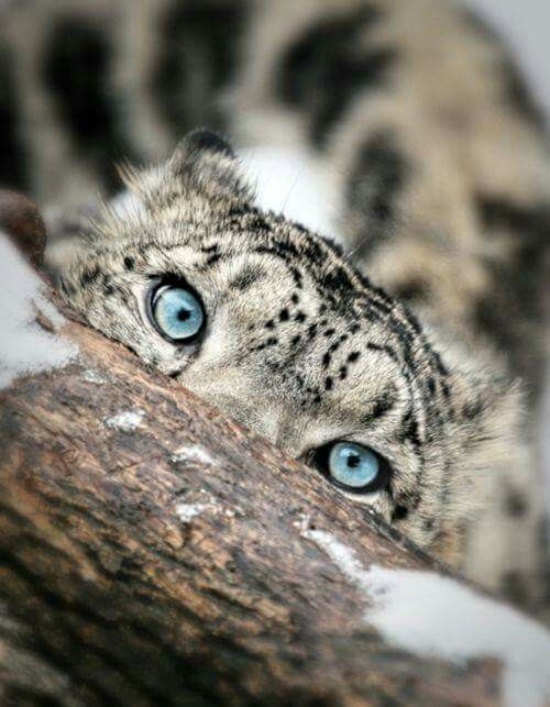 The eyes have it. Beautiful!