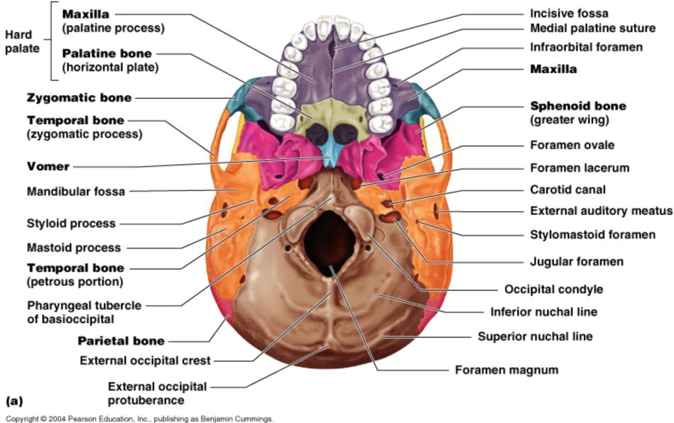 Principles of Human Anatomy and Physiology | Health and Wellness ...