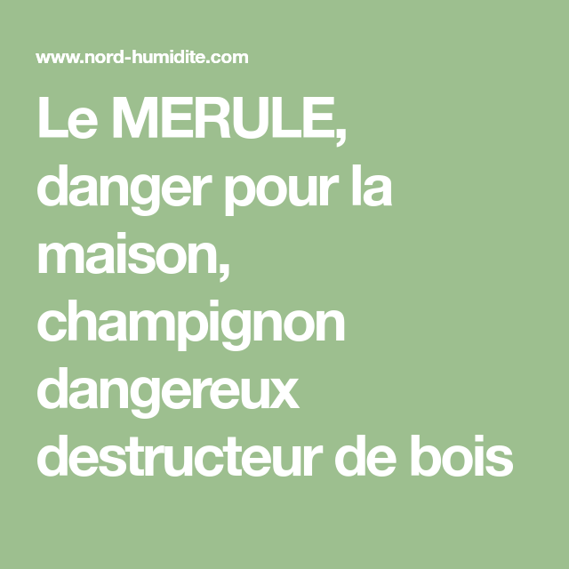 Le MERULE, Danger Pour La Maison, Champignon Dangereux Destructeur De Bois