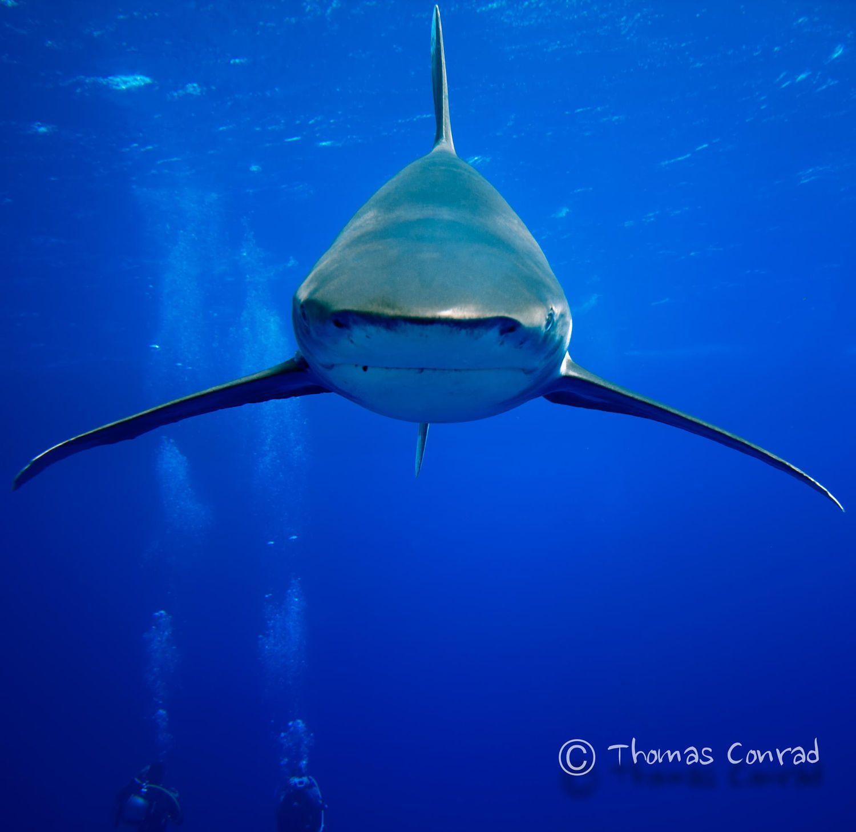 Pin de MAVI en ANIMALS (2) | Bajo el mar, Mar