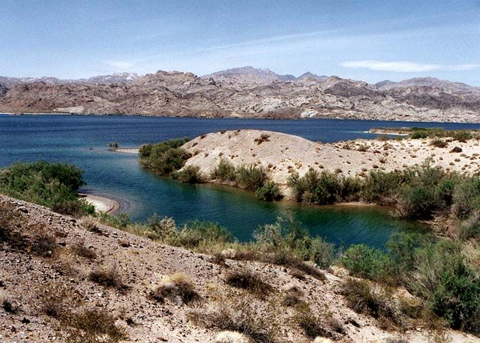 Arizona lake mead national recreation area lake mohave for Lake mohave fishing report