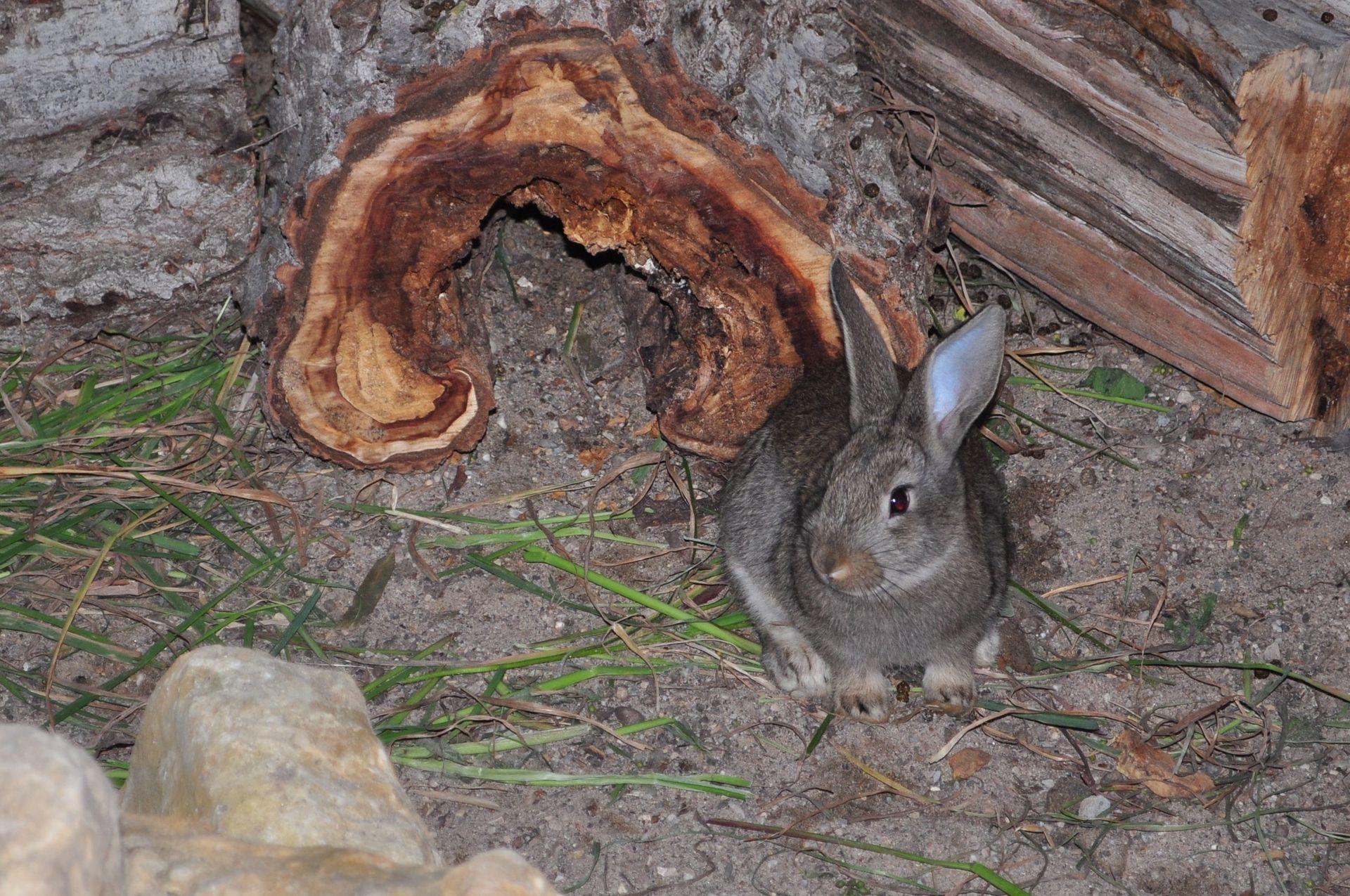 cute rabbit Nuestro Conejo