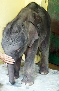 Donate Nowjoin Our Champions For Animals Today To Help Save This Baby Elephant And All The Animals Your Gift Will Help U Elephant Elephant Love