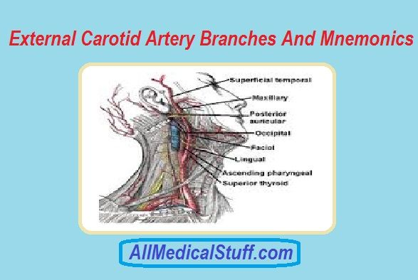 External Carotid Artery Mnemonic For Branches | All medical stuff ...