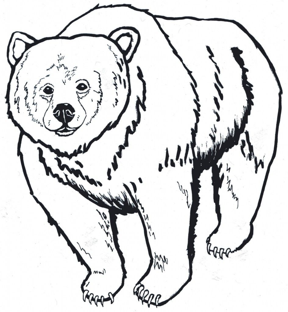 945x1024 Black Bear Clipart California Bear Animal Coloring