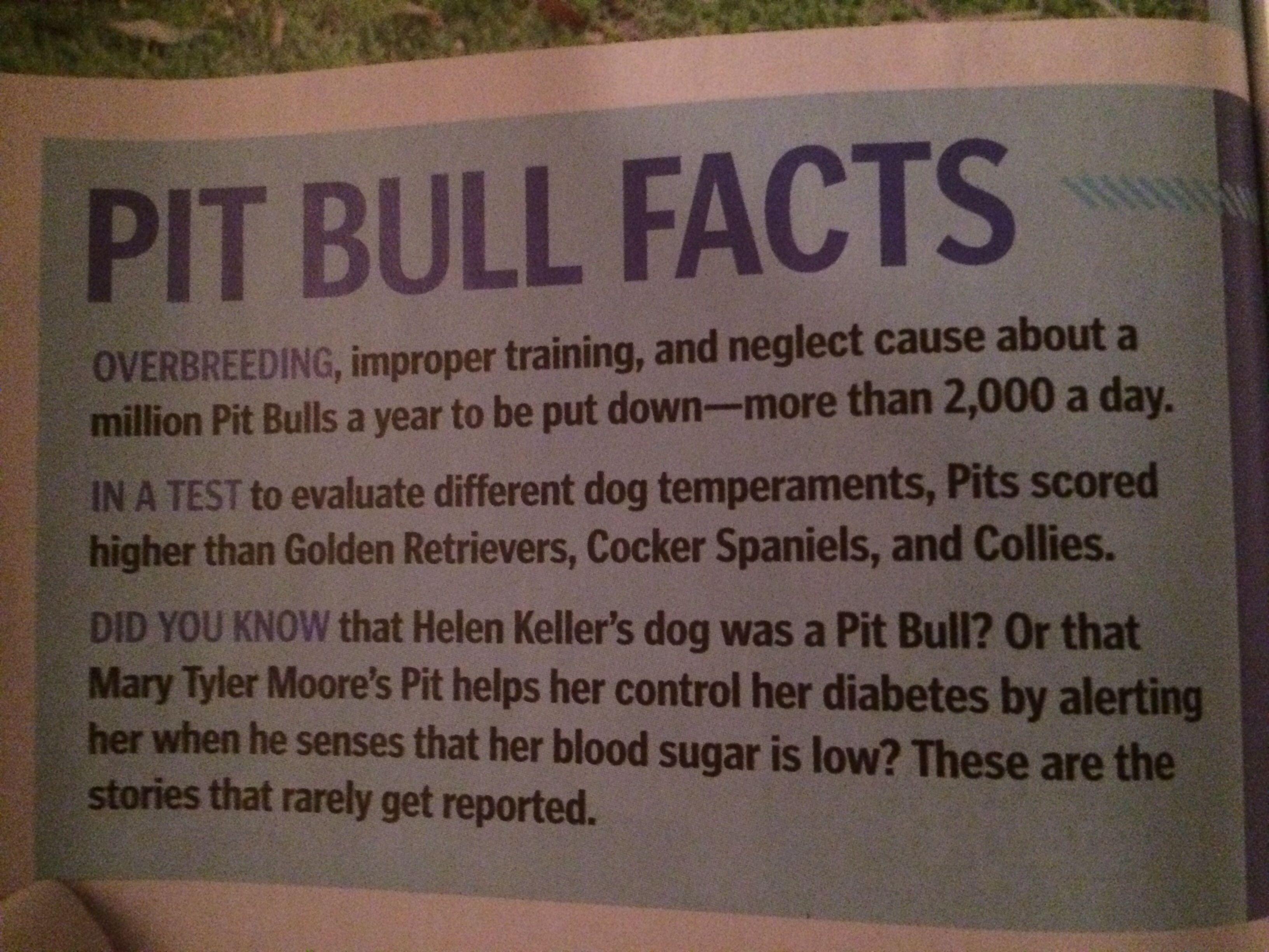 Pitbull facts