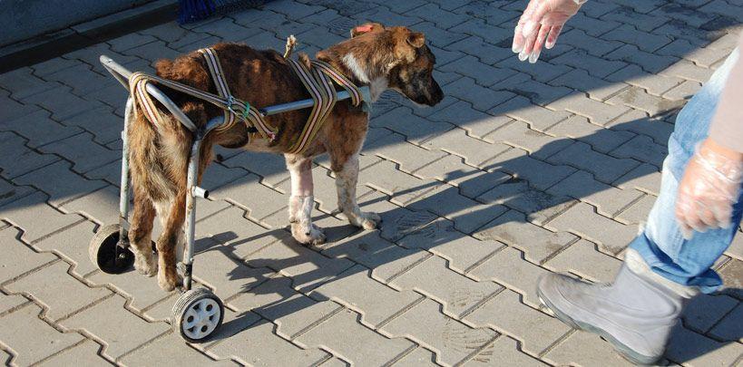 tekerlekli sandalye dünyası kadıköy - Google'da Ara