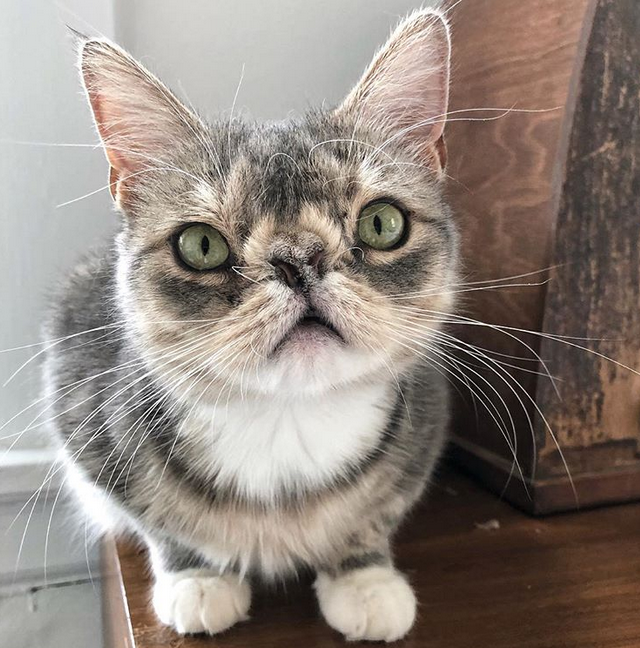 Meet The Adorable Cat With Chromosomal Abnormalities Who Stole Her Parents Hearts With Her Unique Face And Friendly Personality Cute Cats Crazy Cats Cats
