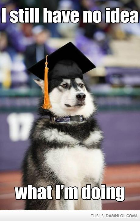 Every Graduate Ever Funny Meme Pictures Funny Animals Funny Pictures